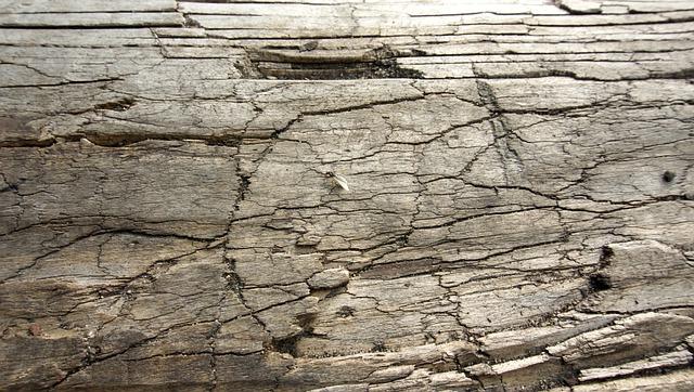 Holz Background Hintergrund Struktur Natur